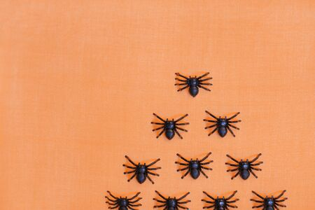 Horrifying halloween tarantulas isolated on orange background. Banco de Imagens