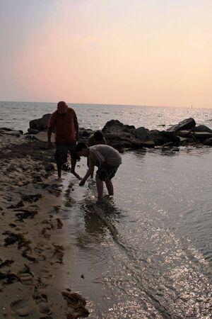 Collecting Seashells on the Seashore Banco de Imagens
