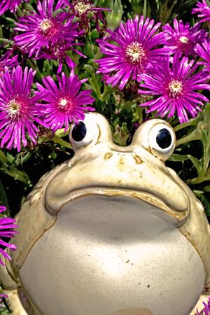bulging: Ceramic frog with bulging eyes in pink flowers