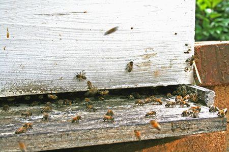 Bee Box Opening
