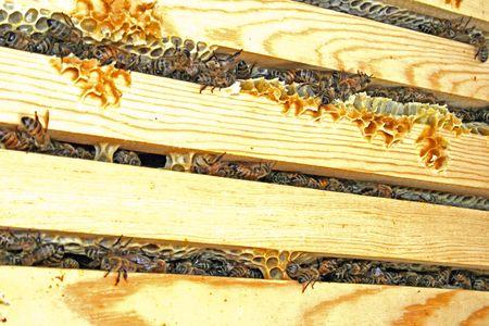 Honey Bees Hive Stock Photo