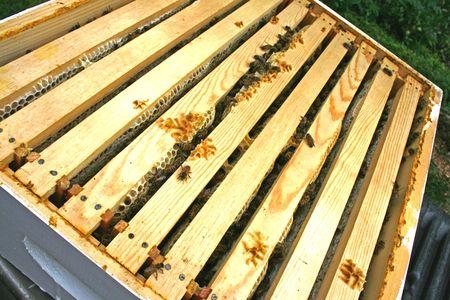 Honey Comb Frames