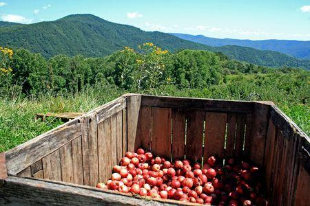 Apples Stock Photo - 3667511