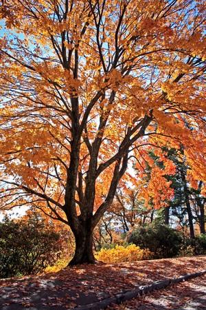 Autumn Sunlight on Blue Ridge Parkway North Carolina photo