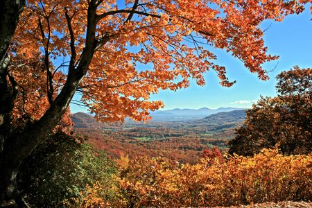 distant: Vista di montagne lontane attraverso autunno alberi su Blue Ridge Parkway, North Carolina