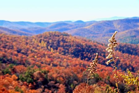 parkway: Autumn foliage with mountains in the distance on Blue Ridge Parkway North Carolina Stock Photo