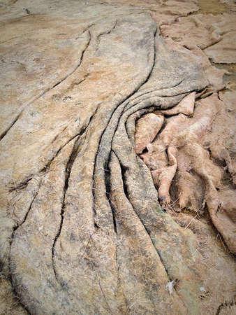 crinkled: Elephant hide seaweed