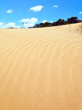 resembling: Beach dunes resembling a desert oasis