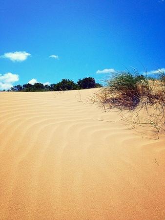 resembling: Sand dune resembling a desert oasis Stock Photo