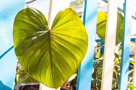 greeen: Greeen leaf Stock Photo