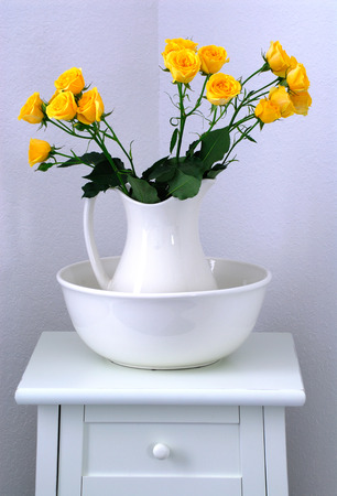 Yellow Miniature Roses photo