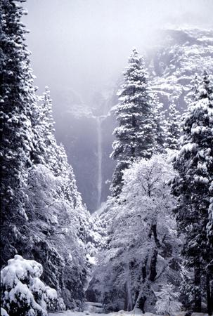 sun bathers: Yosemite Falls, Lower Falls