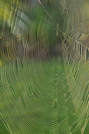greem: Dew on a Spider Web Stock Photo
