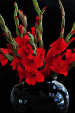 vase: Red Gladiolia