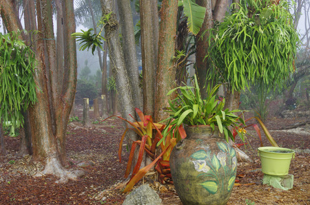 staghorn fern: A Tropical Natural Garden in Florida