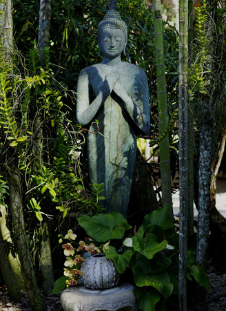 ferns and orchids: Garden Buddha