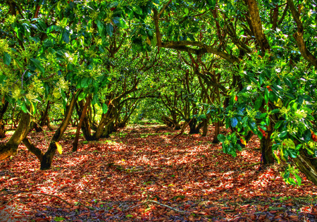 The Mango Grove Stok Fotoğraf - 35034185
