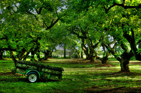 Farm cart in Avocado farm Stock Photo