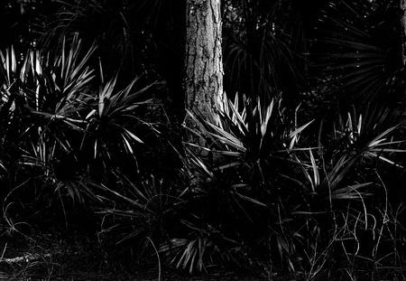 Rocky pineland forest