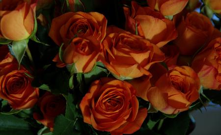 Miniature orange roses