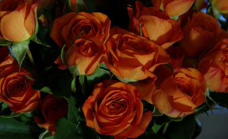 rosas naranjas: Rosas anaranjadas miniatura