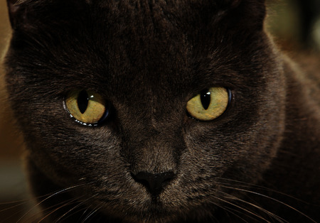 Black cat on alert