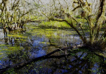 Pond in Big Cypress Swamp Stok Fotoğraf
