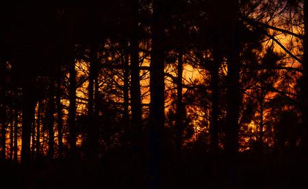 Sunset in Rocky Pinelands Stok Fotoğraf