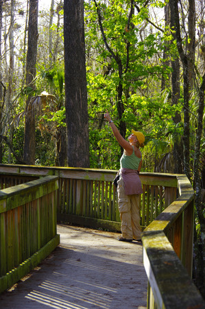 Nature tourist in Big Cypress Swamp