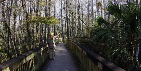 Boardwalk in Big Cypress Swamp, Florida