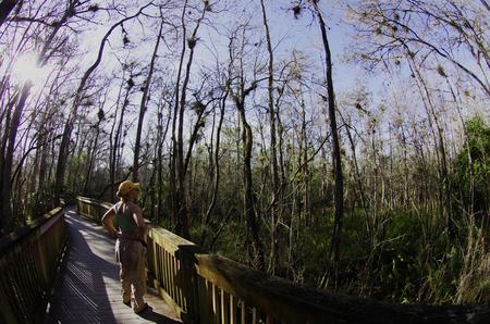 Board walk in Big Cypress Preserve