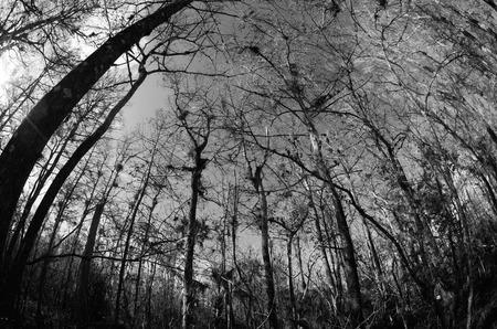 Forest floor looking up in Big Cypress Preserve