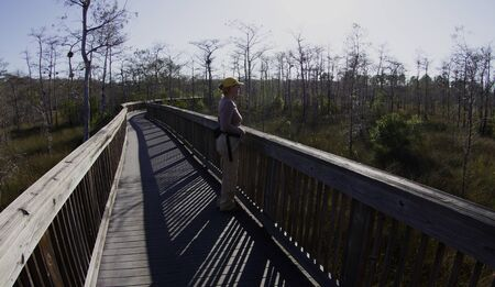 Boardwalk in Big Cypress Swamp