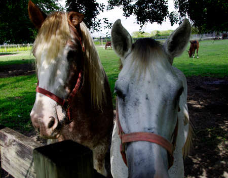 Horses by the fence