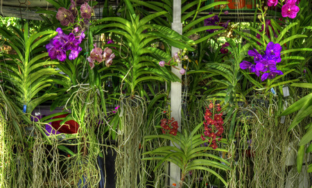 Display at orchid show
