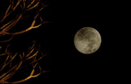 Full Moon and Frangipani tree Imagens