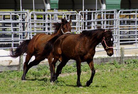 Running horses Stok Fotoğraf