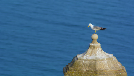 steeple: A lonely seagull standing on the top of a steeple