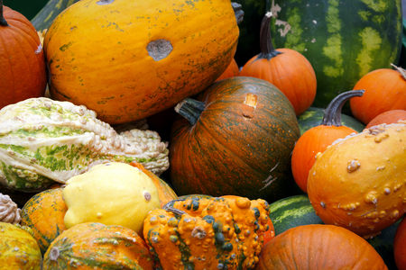 Detail of colorful pumpkins collection on a street autumn market Stock Photo