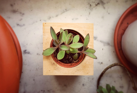 Top view of a small plant planted in a small wooden square vase