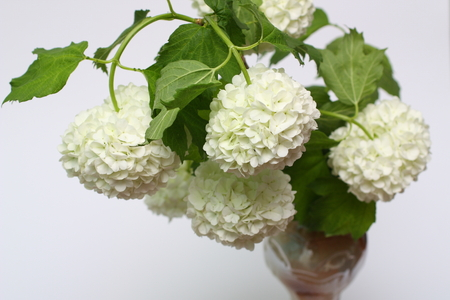 guelder: A vase with a bouquet of white flowers