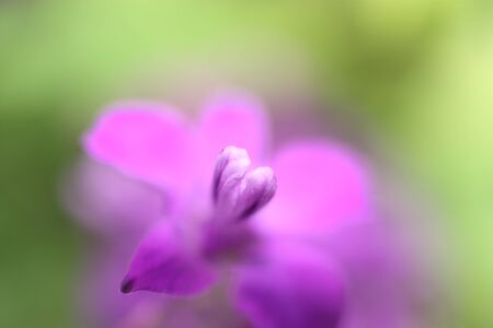 depicted: A little flower depicted close-up Stock Photo