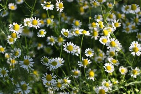 Wild flowers in the field Фото со стока - 44609878