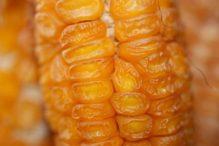 Head of dry corn closeup