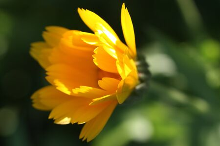 depicted: A little yellow flower depicted close-up Stock Photo