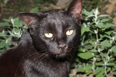 Black cat in the yard