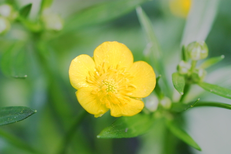 depicted: Little yellow flower depicted close-up Stock Photo