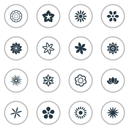 Vector Illustration Set Of Simple Flower Icons. Elements Gerberas;, Sword Lily, Camomile And Other Synonyms Sword Lily, Bay And Sweet Pea.