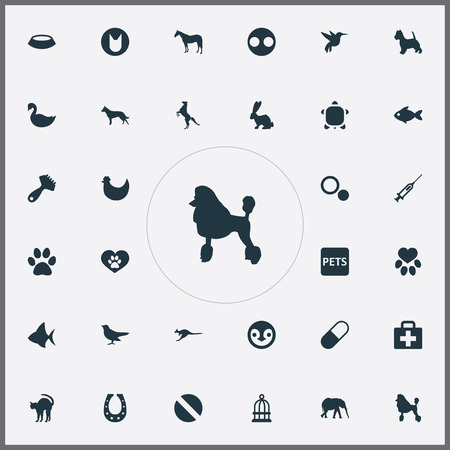 Vector Illustration Set Of Simple Zoo Icons. Elements Hound, Injection, Tortoise And Other Synonyms Food, Beak And Antarctica.