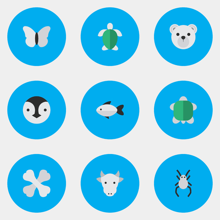 Elements Perch, Moth, Flightless Bird And Other Synonyms Penguin, Bird And Bones.  Vector Illustration Set Of Simple Zoo Icons.